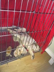 Chewy chillt im Kennel