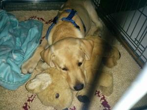 Chewy und sein Stofftier