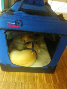 Chewy im Büro-Kennel