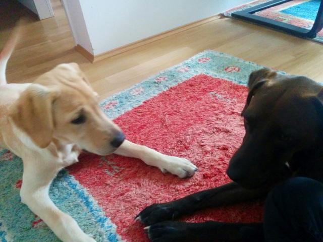 Chewy und Selim