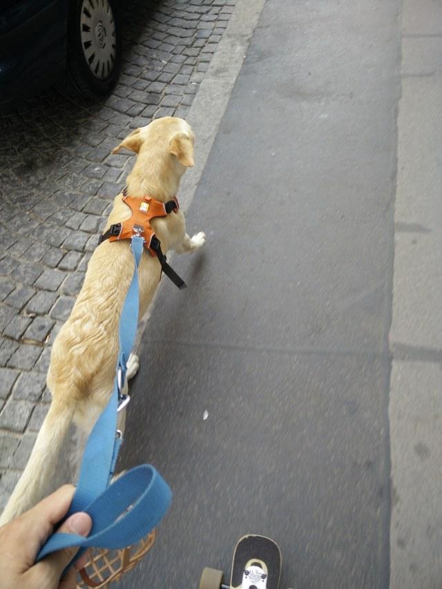 Chewy zieht mich mit dem Longboard